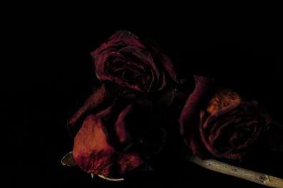 le_rose